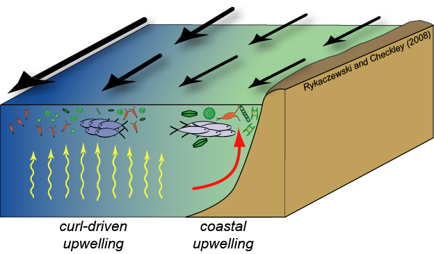 Upwelling Systems